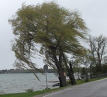 Windy Day at Roches Point, Lake Simcoe by MrPatrickJames