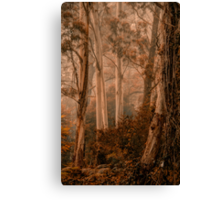 The Love of Trees   - Mount Wilson - NSW  - The HDR Experience Canvas Print