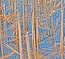 Reeds by Jimmy Ostgard