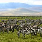 Zebras - Ngorongoro Crater, Tanzania, Africa by Scootarts