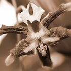 Orchid in Sepia by AnnDixon