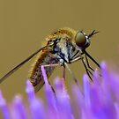 Resin Bee by Brett Chatwin (Chatta)