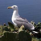 Seagull by mariusvic