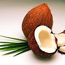 Coconut by photolcu