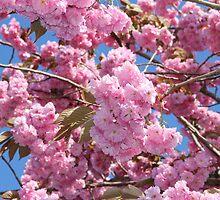 Cherry Tree by MimiB