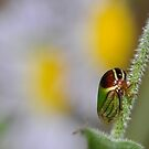 Planthopper or Leafhopper by Michael L Dye