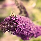The Bee and the Butterfly Bush by Emily Horton