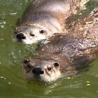 Swimming Otters by caybeach