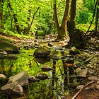 mountain stream in the old forest by pellinni