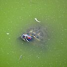 Turtle in Dirty Water by sgrixti