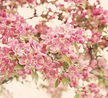 Spring Bloom by ©Maria Medeiros