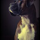 Boxer Dog Portrait by adoptaboxer