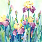 Irises by Tania Richard