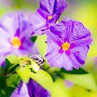 Violet Flowers by RichardPhoto