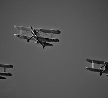 The Fly Bye by Rimrunner