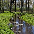 Nature Reserve, Meerbusch, NRW, Germany. by David A. L. Davies