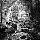 Nelson Falls, Tasmania #2 by Elaine Teague