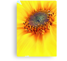 How Hot Is The Sun?? Canvas Print