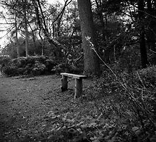 Forest seat by Barry Robinson