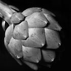 Study of an Artichoke - Three by photolove