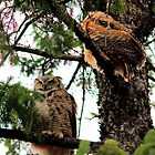 Great Horned Owl & Baby by Larry Trupp