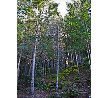 hillside forest Photographic Print