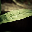Nature Purity After Rain by PutroGraph