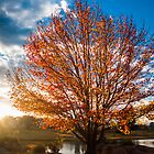 Autumn In Stanthorpe by Peter Billiau