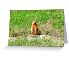 Standing at Attention Greeting Card