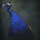 Peacock by Judi Taylor