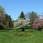 Beautiful Crabapple and Apple Trees by joycemlheureux