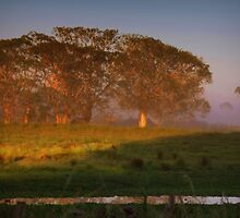 Early morning light with a dash of fog by myraj