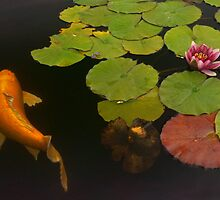 Orange Koi And Flower by Larry3
