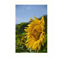 Bee Sunny Art Print