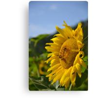 Bee Sunny Canvas Print