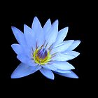 Blue Waterlily by LeJour