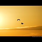 Two Seagulls Flying Towards The Burning Sun - Stony Brook, New York  by  Sophie Smith