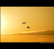 Two Seagulls Flying Towards The Burning Sun - Stony Brook, New York  by © Sophie W. Smith