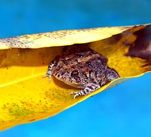 Floating toad by ♥⊱ B. Randi Bailey