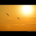 Two Seagulls Flying Under The Burning Evening Sun - Stony Brook, New York  by  Sophie Smith
