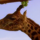Giraffe by SoftHope