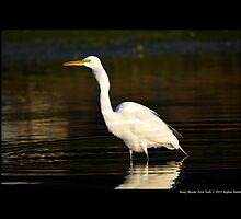 Ardea Alba - Great White Egret Swallowing Fish In Porpoise Channel - Stony Brook, New York by © Sophie W. Smith