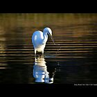 Ardea Alba - Great White Egret In Porpoise Channel - Stony Brook, New York by © Sophie Smith