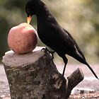 An  Apple A Day.................... by lynn carter
