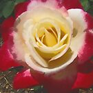 Rose Double Digi Delight  by marjistone