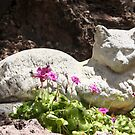 Garden Kitty by heatherfriedman