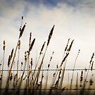 Inverleigh Grass by Mick Kupresanin