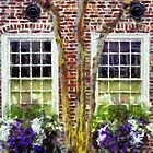 Charlestons Window Boxes by JHRphotoART