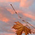 Hanging On! by Jenni Greene