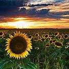 Summer Guardian by John  De Bord Photography